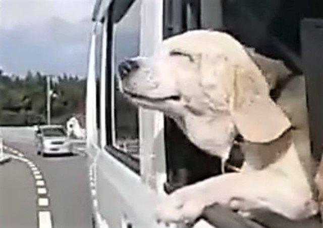 虹の橋に逝く前にかつてお世話になった人の元へ現れた犬のお話