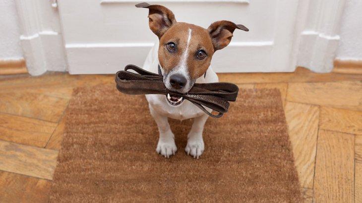 犬が散歩に行きたくてたまらないときにする仕草3つ