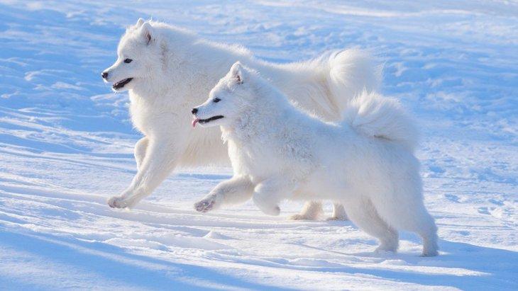 寒い地域で生まれた犬種5選