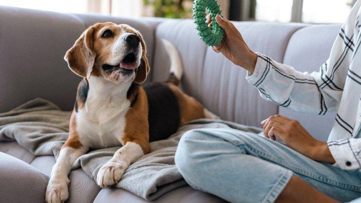 犬に構うべきではない3つのタイミング その理由や適切な対処法を解説