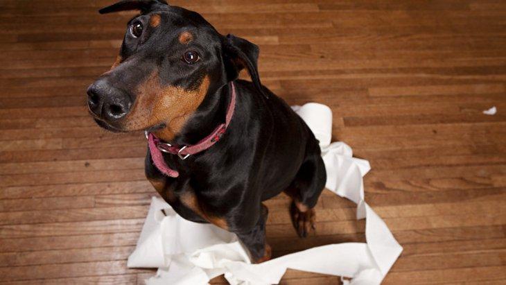 犬が尿漏れをする原因と考えられる病気、対処法について