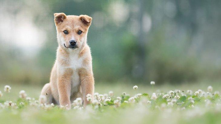 犬は『人の言葉』を理解している?どれくらい覚えられるの?