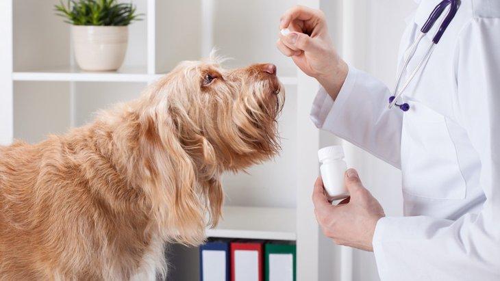 愛犬が薬を飲んでくれない時の3つの対処法