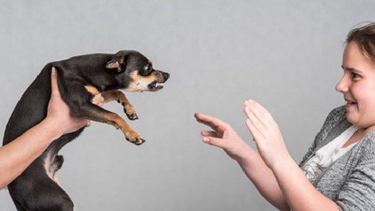 「噛む」と「咬む」の違いとは?「かみ」癖対処法3パターン