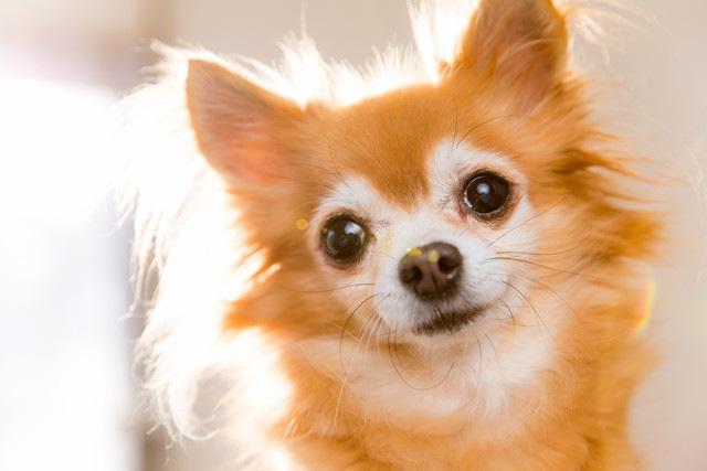 犬の毛ヅヤをよくする2つのポイントと美容法