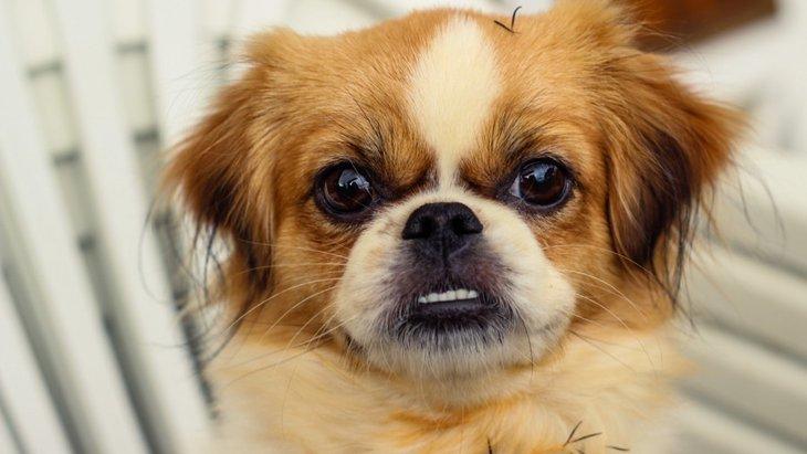 犬を甘やかしすぎると起こる悪影響3つ