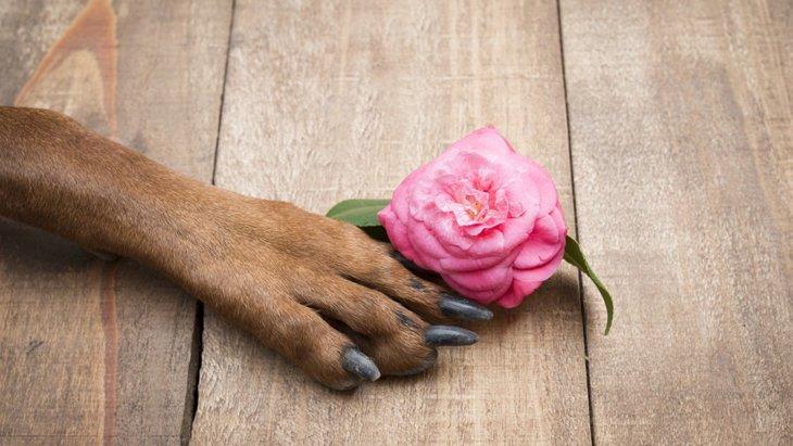 犬の爪切りの選び方!おすすめ商品から使い方まで