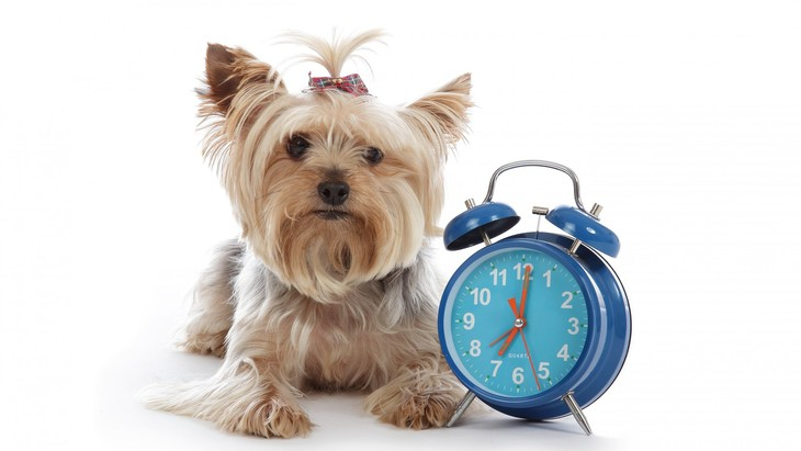 犬の一日のスケジュールは?過ごし方や睡眠時間はどのくらい?