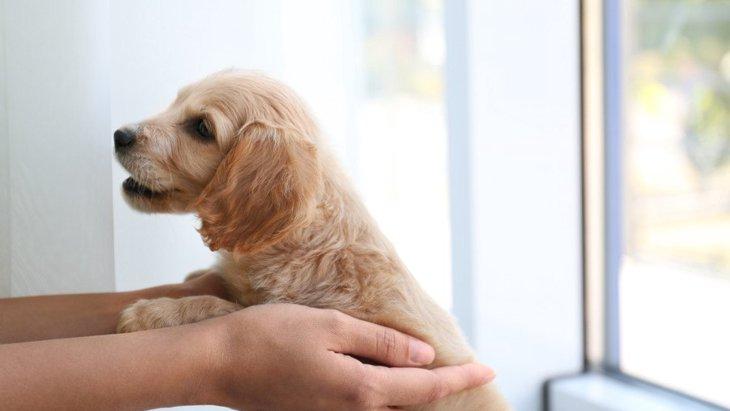 【あるある】犬を一度飼うとまた犬を飼いたくなる心理4つ