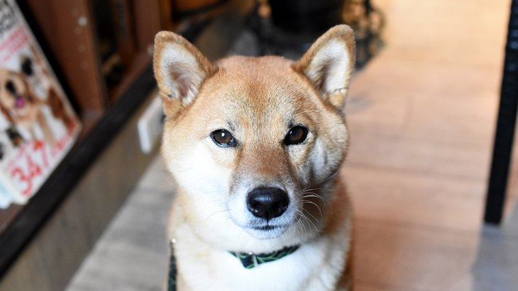町田のドッグカフェ!犬同伴で行けるカフェおすすめ11選