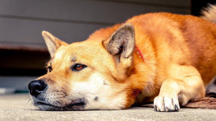 『耳が悪くなった犬』がよくする仕草3選