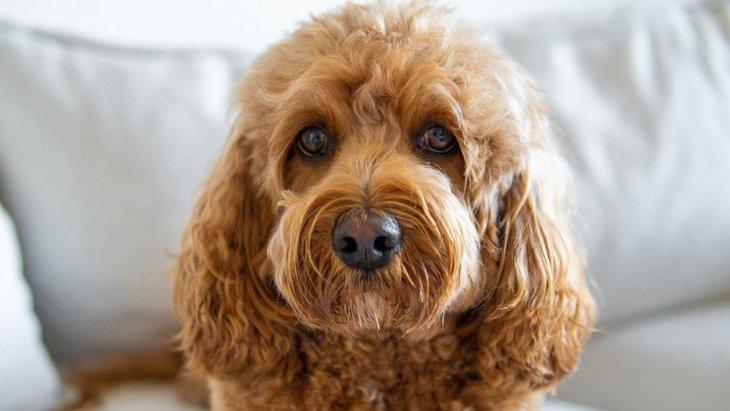 犬にとって危険な『日常のトラブル』6選