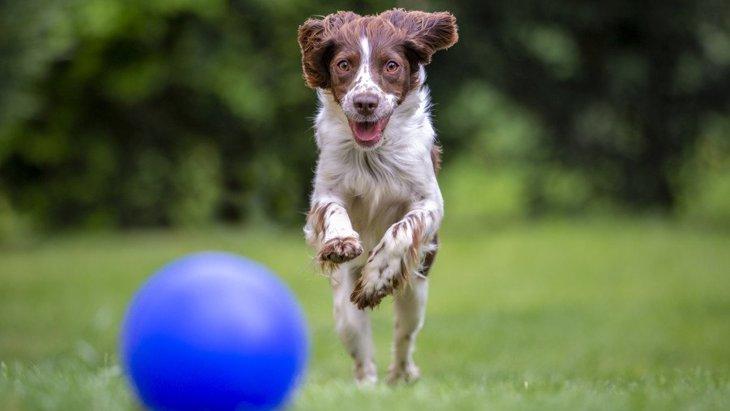 犬にイタズラをしすぎると起こる悪影響4選!面白がってやり過ぎるのは絶対NG!