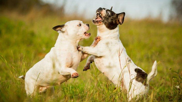 多頭飼いで犬同士が喧嘩をする原因とは?やりたい対処法まで