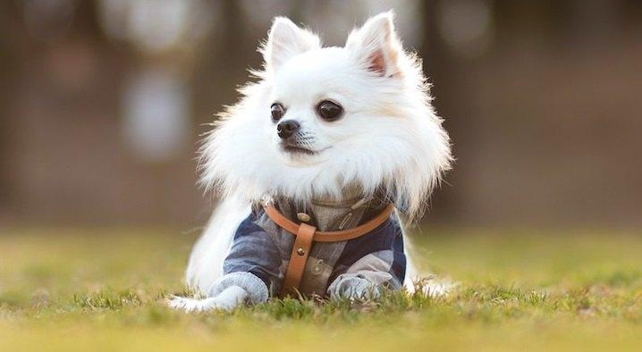 犬にとってNGな『おしゃれ』4選!ヘアカラーは危険?マニキュアもあるって本当?