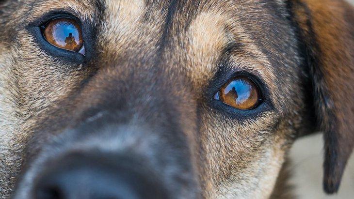 犬が目を見開いているときの心理3つ