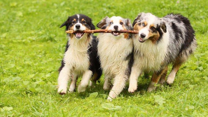 犬の多頭飼いに相性のいい組み合わせはあるの?