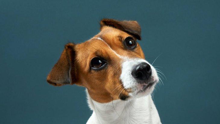 時代錯誤!犬を家族として扱っていない人がしている酷い行動3選