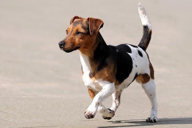 犬がクルクル回る理由とは?心理状態や考えられる病気