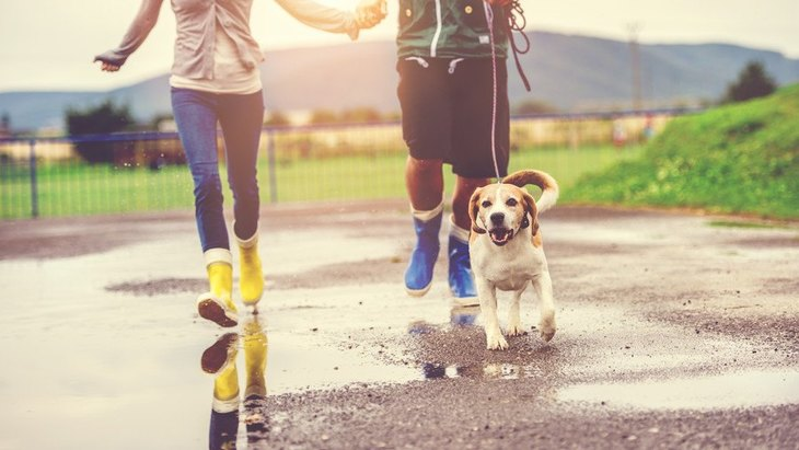 犬の散歩を『雨の日』に行くときに必ず意識すべき2つのこと