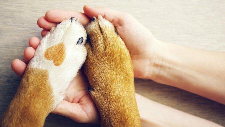 犬が前足を組む心理2つ