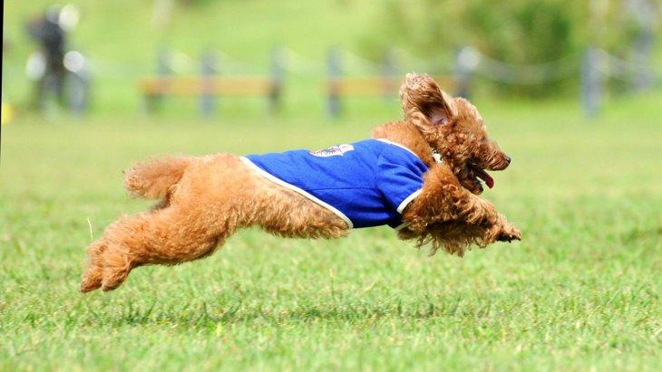 犬が『運動不足』になっている時の症状5選!危険な状態や改善する方法などを解説