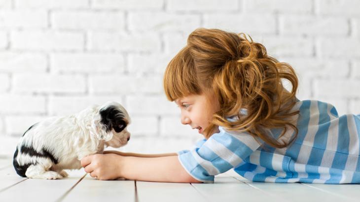 【一歩間違えると悪影響に】子犬とのコミュニケーションにおける注意点