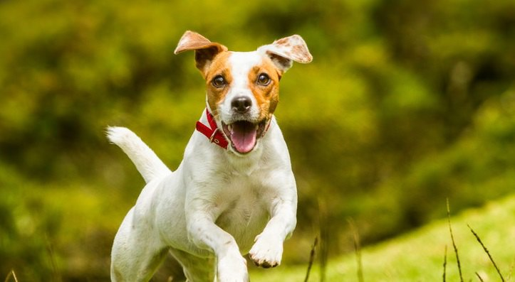 興奮しやすい犬にしてはいけない『絶対NGなしつけ方』2選
