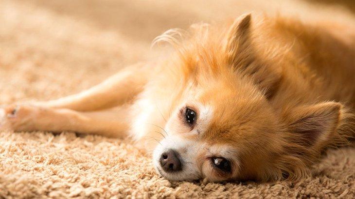 犬と暮らす家のススメ!人とペットが快適に過ごせる環境作りとは