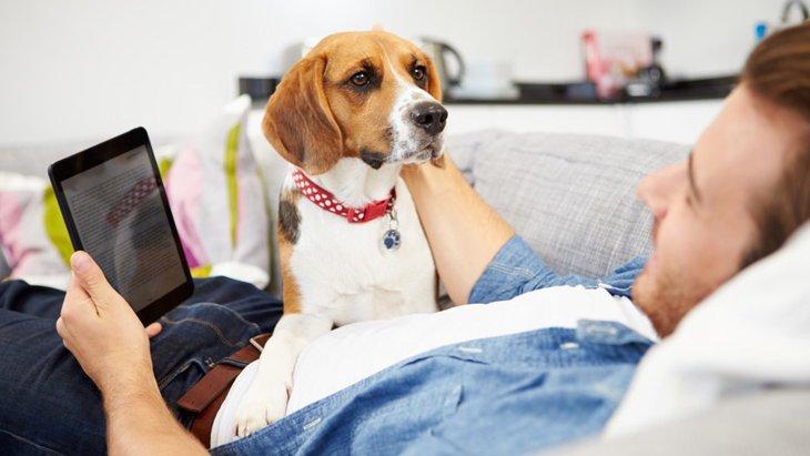 犬は飼い主の休日が分かる?
