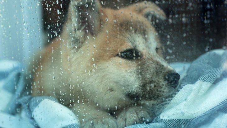 犬は『雷』が苦手?3つの怖がる理由とリラックスさせるためのコツを解説