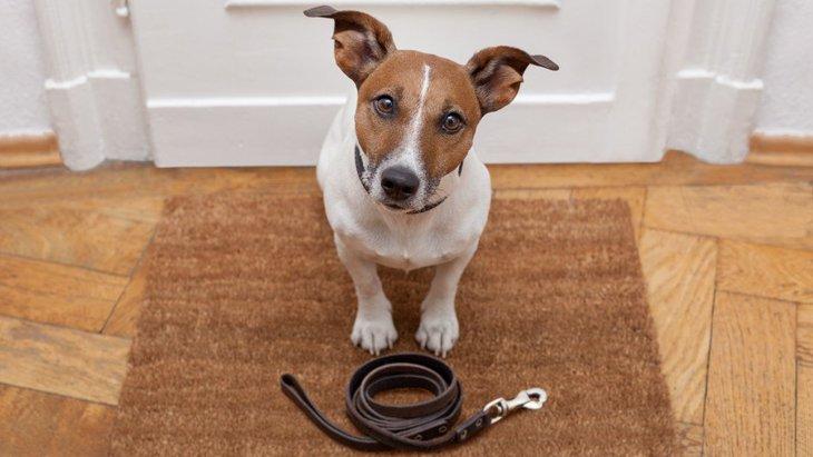 犬が運動不足になるとどんな悪影響がある?どのくらい運動すればいいの?