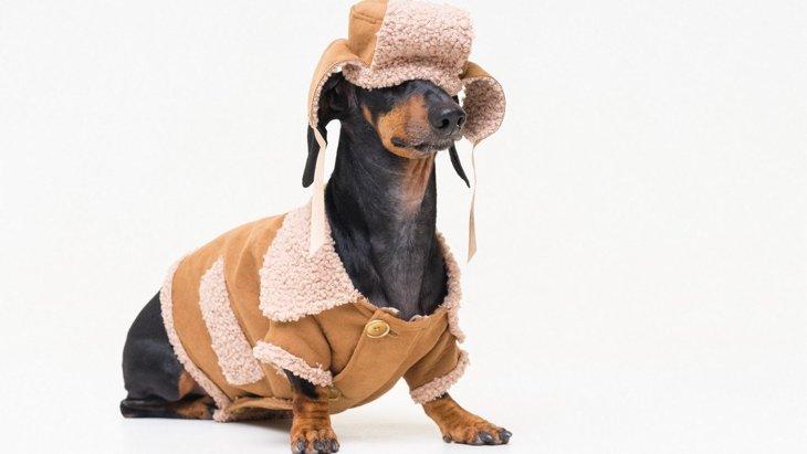 犬に洋服って必要なの?3つの効果とNG行為を解説