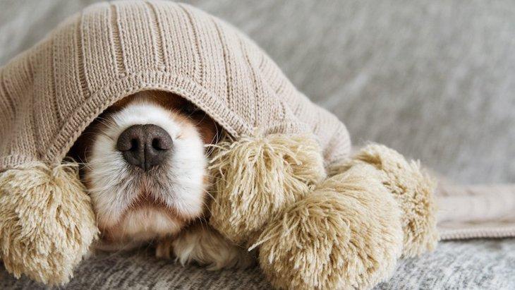 犬への愛情不足が招く『4つの危険なこと』