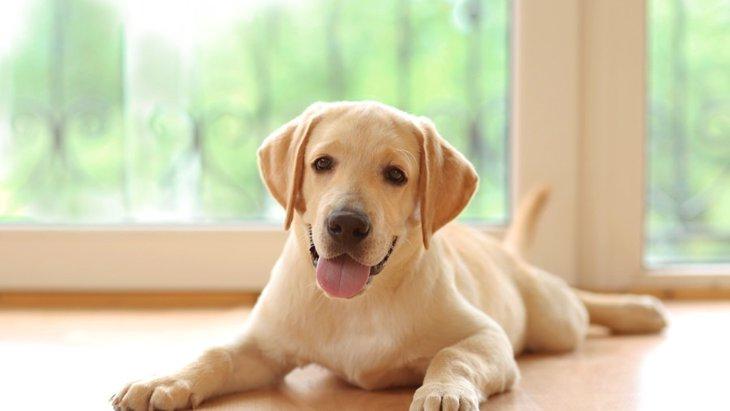 犬の寿命が伸びた理由と犬の高齢化による3つの影響