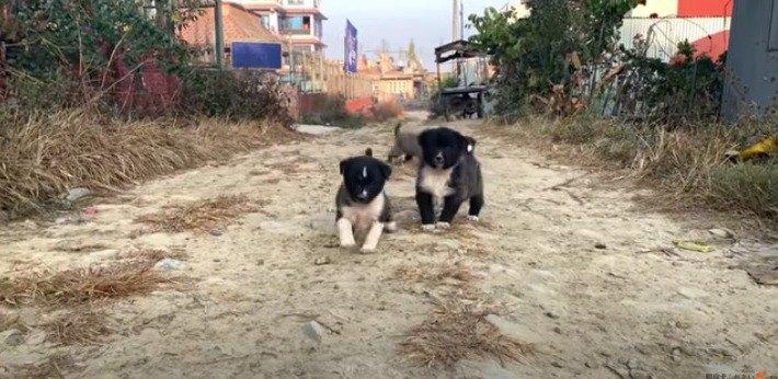 よちよち歩きの野良子犬♡警戒しつつ歩み寄ってくる姿に悶絶必至…!