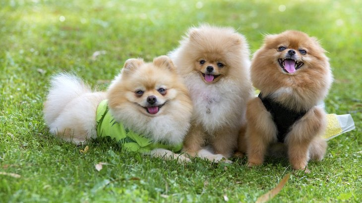 犬の多頭飼いで大変なこと4選!2頭目を飼おうとしている人はチェックしよう!