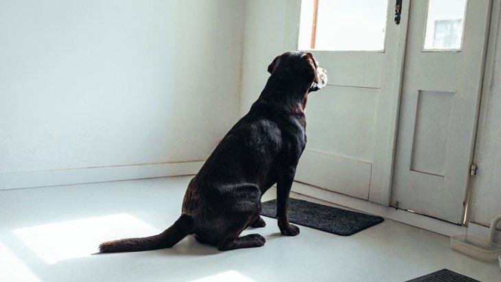 犬はお留守番している時、何をしてるの?