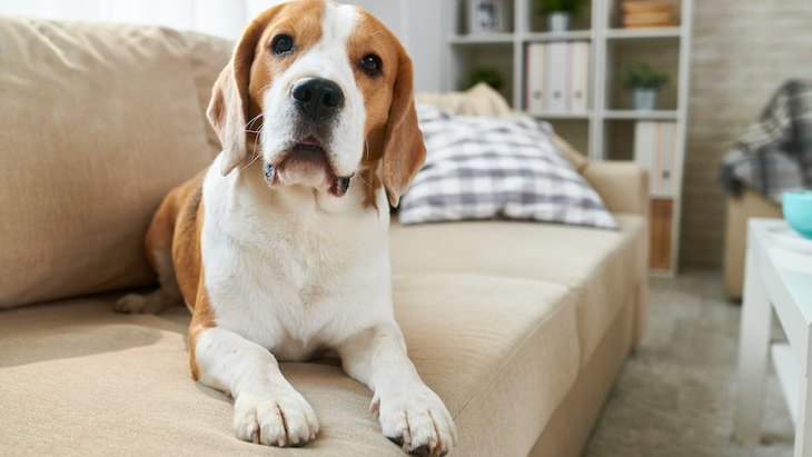 犬が人を慰めている時にする行動5つ