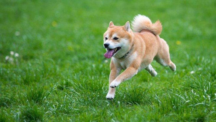 人と同じように犬も『ランナーズハイ』を経験する!【研究結果】