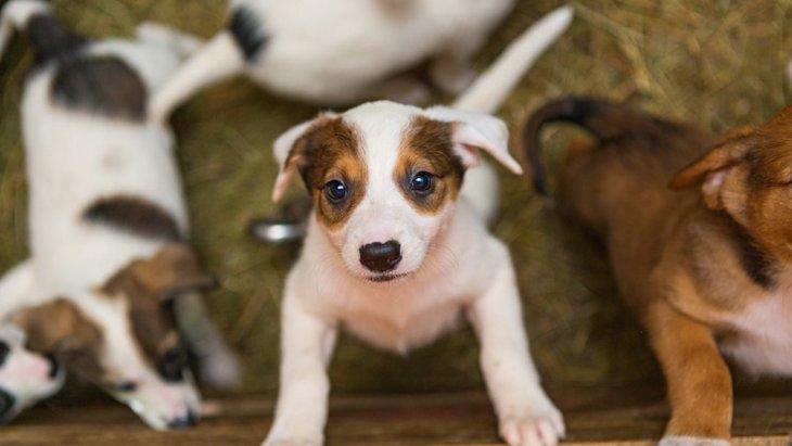 保護犬選びとお見合いパーティーの意外な共通点【研究結果】
