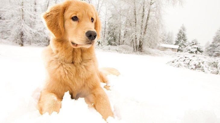 冬の犬のお散歩は「融雪剤」に要注意!わんこへの影響と対策