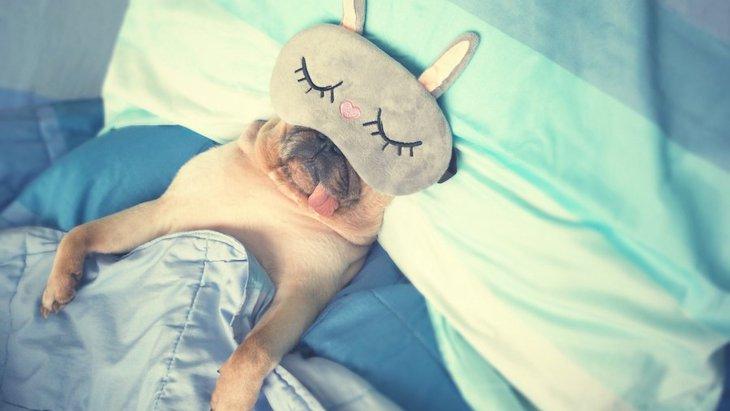 犬は寝ているときにどんな夢を見るの?