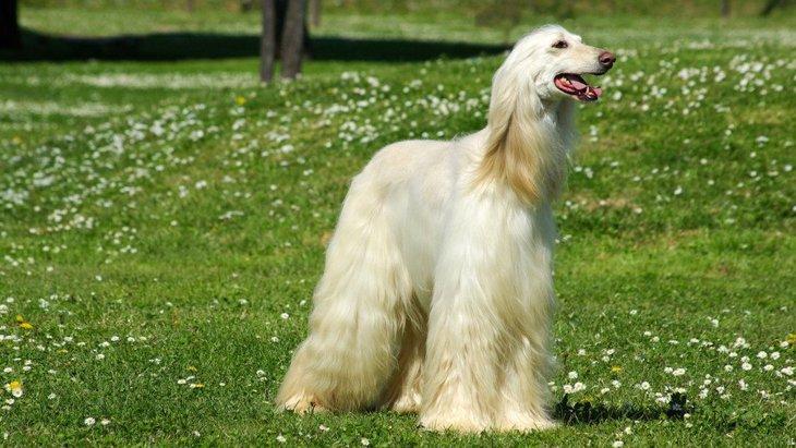 犬の毛をサラサラにする方法と気を付けたいこと
