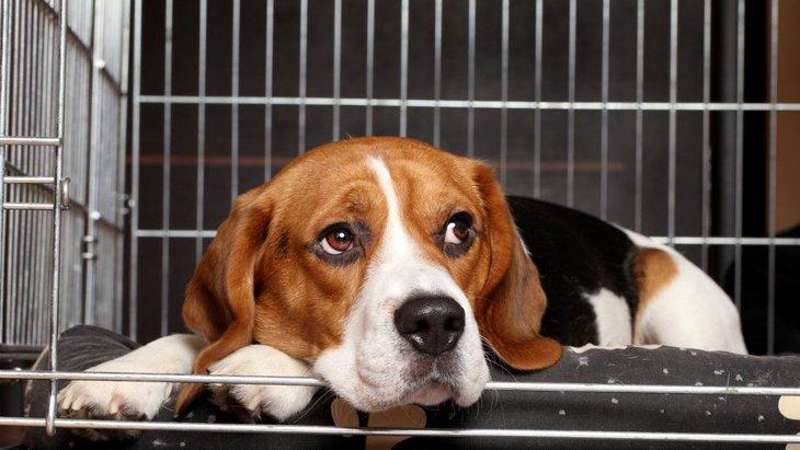 犬がサークルやケージに入ってくれない理由4つ