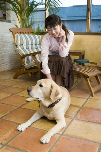 老犬の寝たきりや全盲の介護、付き合い方