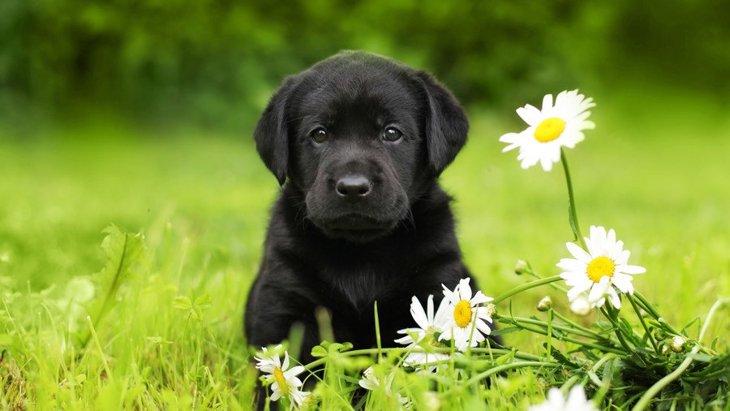 犬へのハーブの与え方!その効果や危険性、アロマについて