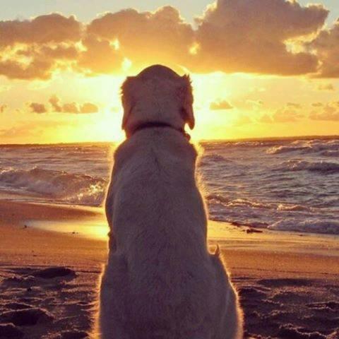 『首輪が泣いている』~耳を傾けてください!犬たちの命の叫び~