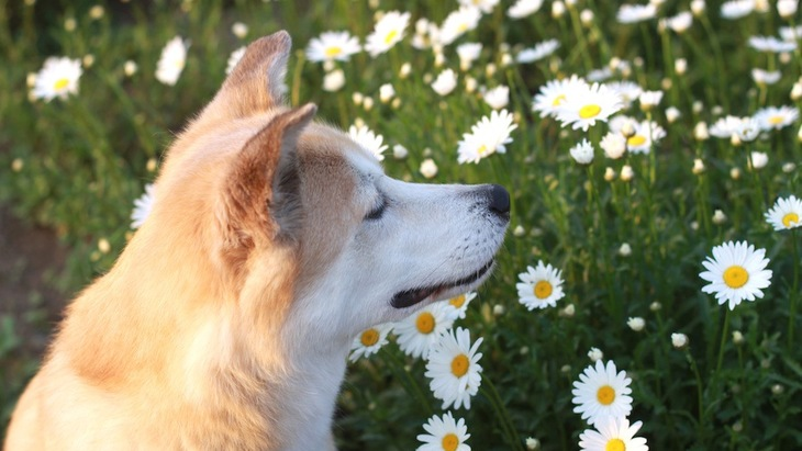 現代を生きる犬に必要なホリスティックケア