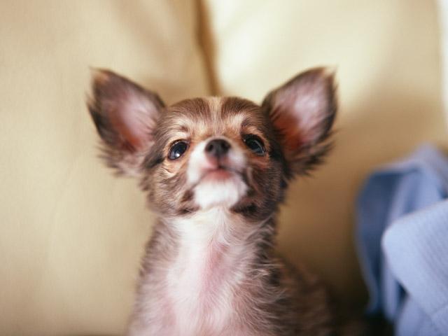 ペットショップに保護犬を紛れ込ませてみた!ブラジルで行われ実験